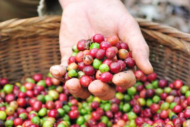 Rules about the production of organic coffee